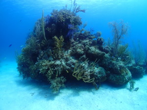 PADI scuba diving certification - Expand your world