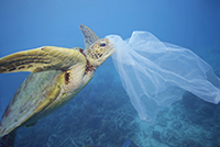 Turtle Eats Plastic Bag